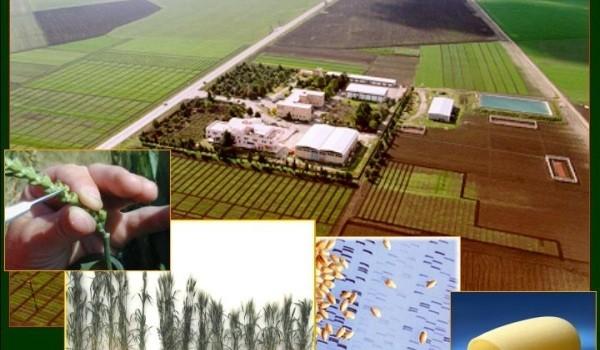 Calabria, bando per collaboratori