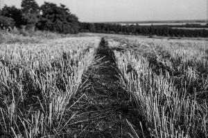 agricoltura_sudlavoro