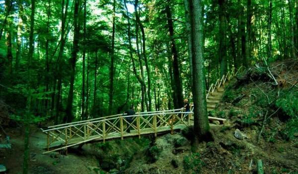 Calabria, 10 esperti per Rete Natura 2000