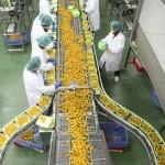 Lavoro Abruzzo: operai e magazzinieri da Amadori