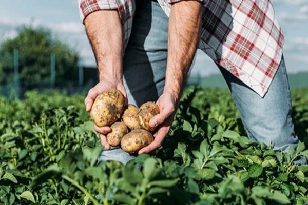 Lavoro Calabria, cercasi braccianti agricoli